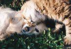 האם חיים עם חיות מחמד עשויים להפחית את הסיכוי לסבול מאלרגיות?