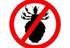 רגישות יתר לעקיצות כינים