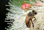 אלרגיה לדבש